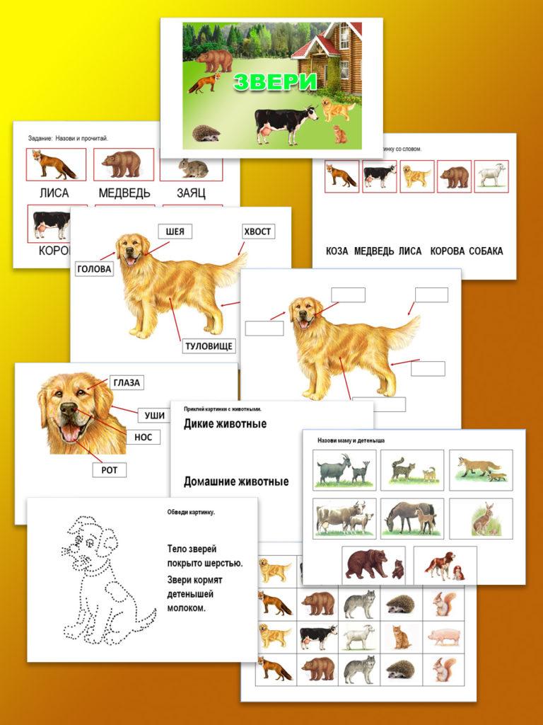 беседы о животных