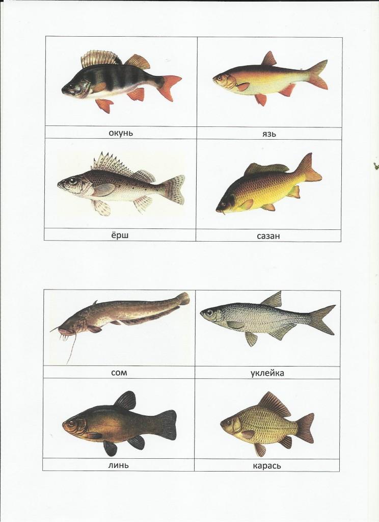 здесь русские рыбы картинки с названиями первой стадии глаза